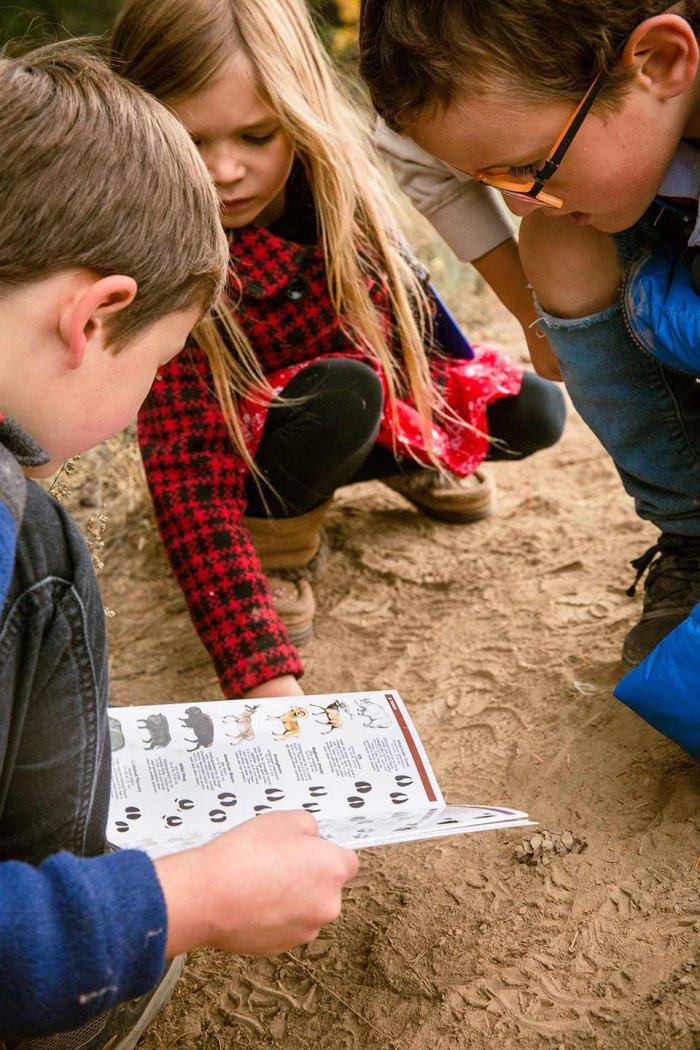Outdoor Learning - Animal Tracks Weatherproof Guide